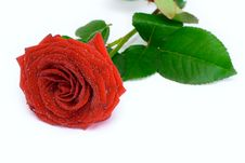Free Red Rose Stock Photo - 5410070
