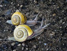 Free Snails Race Pace Royalty Free Stock Photos - 5410968