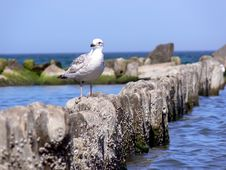 Free Sea Gull Stock Photos - 5411473