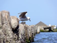 Free Sea Gull Stock Photography - 5411522