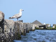Free Sea Gull Stock Photos - 5411583
