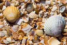 Free Sea Shell Stock Images - 5411974