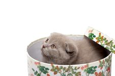 Free Scottish Fold Kitten Stock Images - 5412994