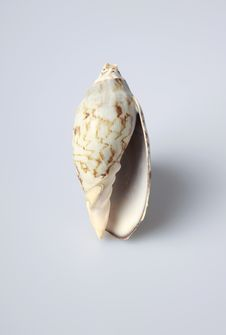 Free Sea Shell Stock Photography - 5413332