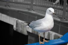 Free Close Up Of A Seagull Royalty Free Stock Image - 5413436