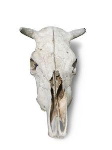 Skulls Bull Stock Images