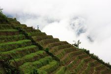 Free Rice Terraces Royalty Free Stock Photos - 5414198