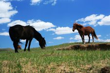 Free Horses Stock Images - 5414514