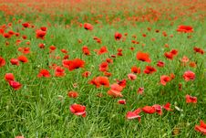 Free Red On Green Grass Royalty Free Stock Image - 5414526