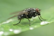 Free Fly Sitting On A Leaf Royalty Free Stock Photo - 5414945