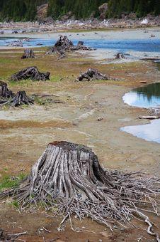 Free Lakeside Stumps Royalty Free Stock Photos - 5414968