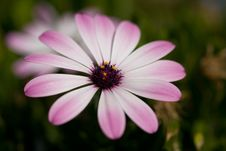 Free Nice Pink Flower Stock Photography - 5415002