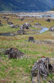 Free Lakeside Stumps Stock Photo - 5415060