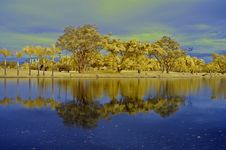 Reflection Of Tree And Sky In The Lake Royalty Free Stock Image