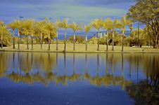 Free Reflection Of Tree And Sky In The Lake Royalty Free Stock Photography - 5415137