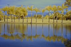 Free Reflection Of Tree And Sky In The Lake Royalty Free Stock Photos - 5415138