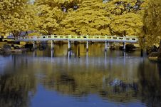 Free Reflection Of Tree And Bridge In The Lakes Stock Photo - 5415150