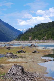 Free Lakeside Stumps Royalty Free Stock Photography - 5415227