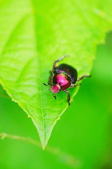 Free Bug On The Plant Stock Photos - 5416303
