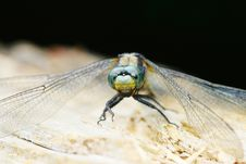 Free Dragonfly Stock Photo - 5416320
