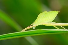 Free The Insects On The Leaf Stock Photography - 5416592
