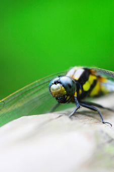 Free Dragonfly Royalty Free Stock Photo - 5416595
