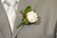 Free White Rose Stock Photo - 5417040