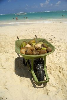 Coconuts For Sale On Exotic Beach Royalty Free Stock Photography