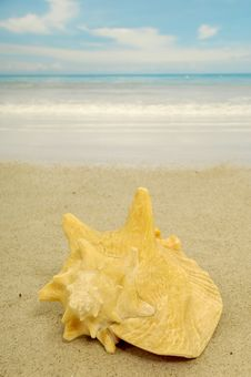Free Conch Royalty Free Stock Images - 5418239