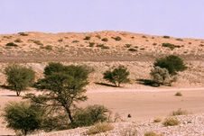 Free Kgalagadi Transfrontier Park Landscape Royalty Free Stock Images - 5418459
