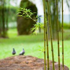 Free Bamboo In Garden Stock Photos - 5418583