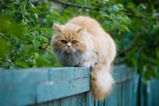 Free Cat On A Fence Stock Photography - 5418852