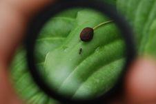 Free Ant Stock Photo - 5418890