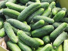 Free Pile Of Fresh Green Cucumbers Royalty Free Stock Photos - 54127398