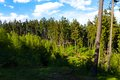 Free Spruce Forest Stock Photos - 54147343