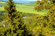 Free Spruce Forest Royalty Free Stock Photography - 54147227