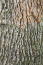 Free Bark Texture Royalty Free Stock Photo - 5423365