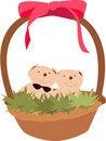 Free Bear In Basket Stock Photos - 5427603