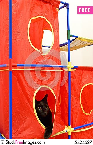 Free Cat Playhouse Royalty Free Stock Photography - 5424627