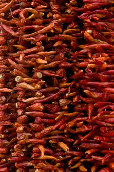 Free Dried Red Chillies Stock Images - 5420154