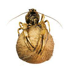 Free Crayfish On Coconut Royalty Free Stock Image - 5420256