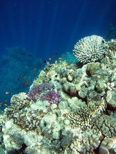 Free Underwater Landscape Stock Image - 5420601