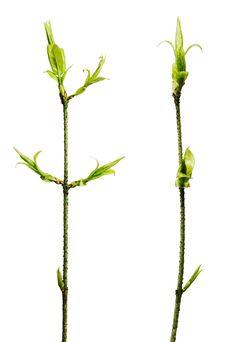 Free Plant Isolated On White Royalty Free Stock Photo - 5420715