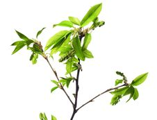 Free Plant Isolated On White Stock Image - 5420721