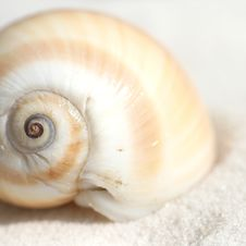 Free Curved Seashell Stock Image - 5422511