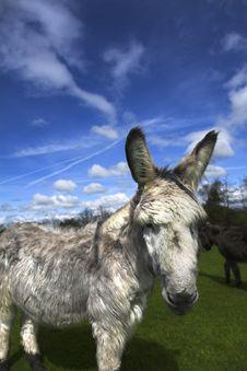 Free Retired Donkey Royalty Free Stock Photos - 5422718