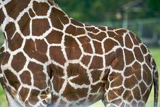 Free Giraffe Hide Stock Photography - 5423212
