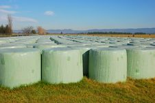 Free HAy Bales Stock Images - 5423934