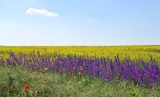 Free Summer Fields Royalty Free Stock Photo - 5424025