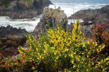 Free Seaside Flowers Stock Images - 5424494